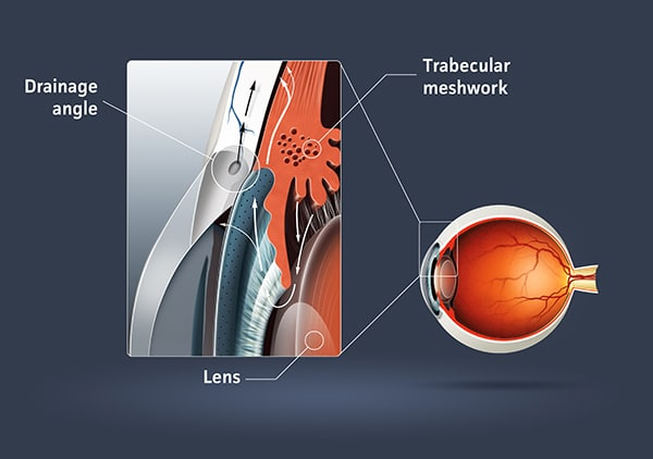 A medical concept image of the anatomy of the human eye ball.